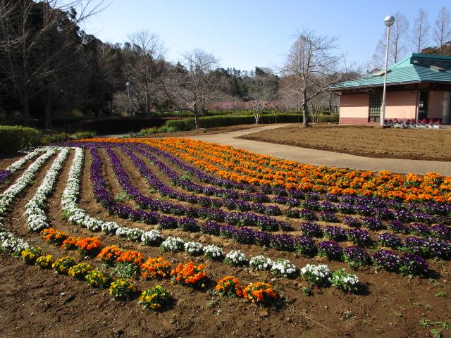 花のテラス前の花壇