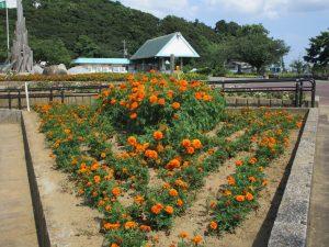 マリーゴールドの花壇